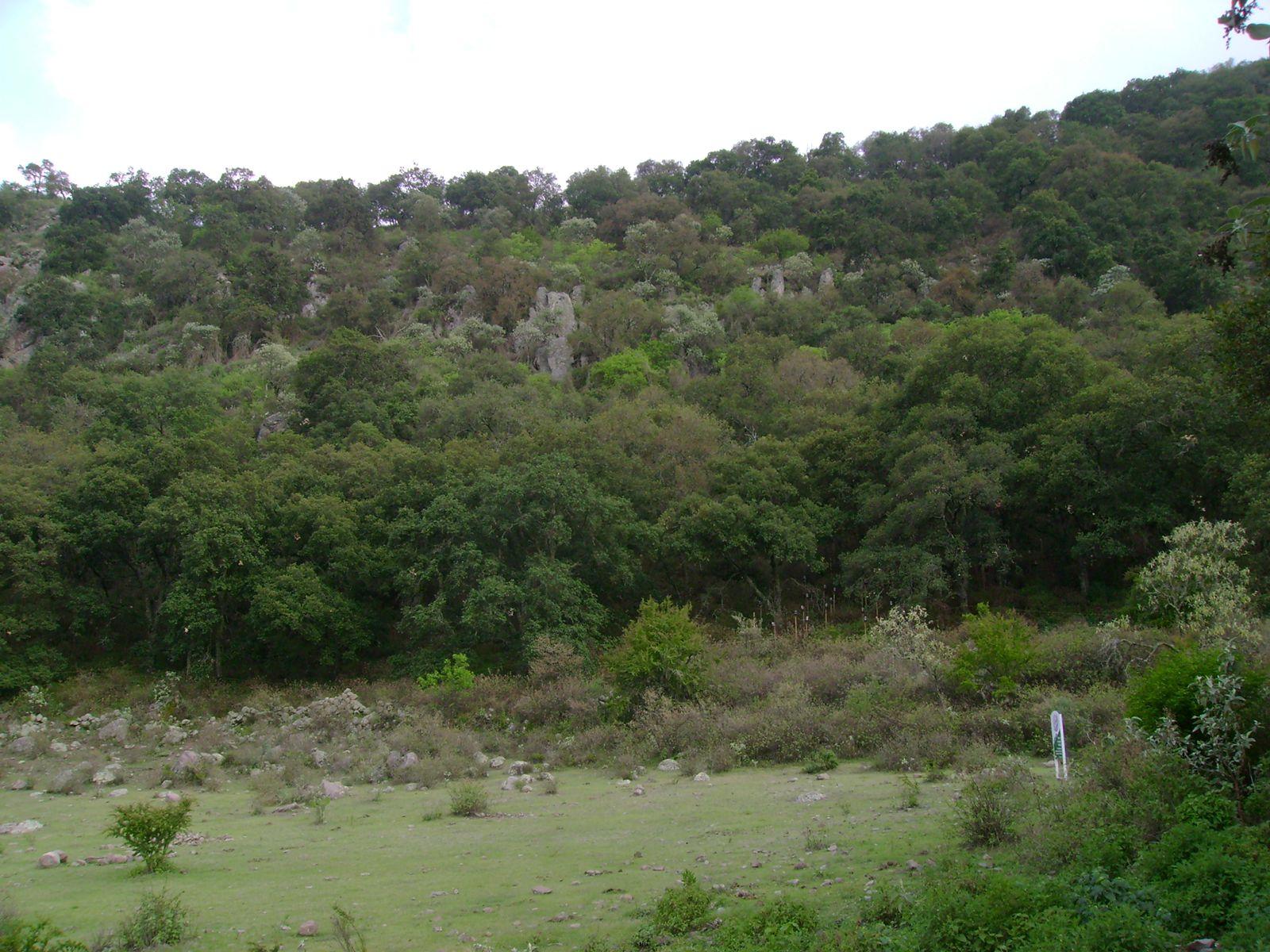 Habrá Jornada de reforestación este fin de semana en la capital