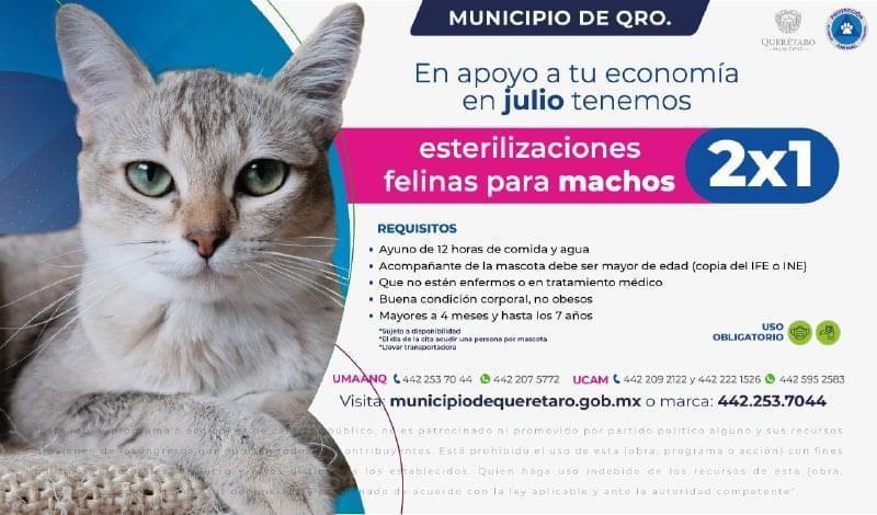 Ofertan esterilizaciones para gatos al 2 por 1 en el municipio de Querétaro