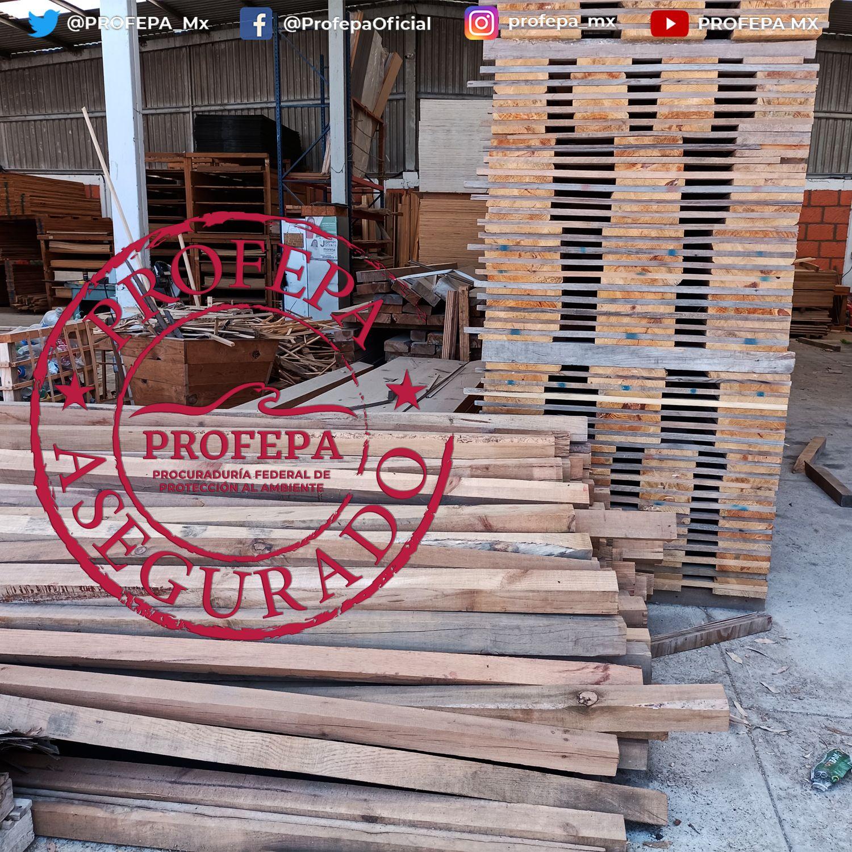 Profepa asegura en Querétaro 120 metros cúbicos de madera de pino aserrada