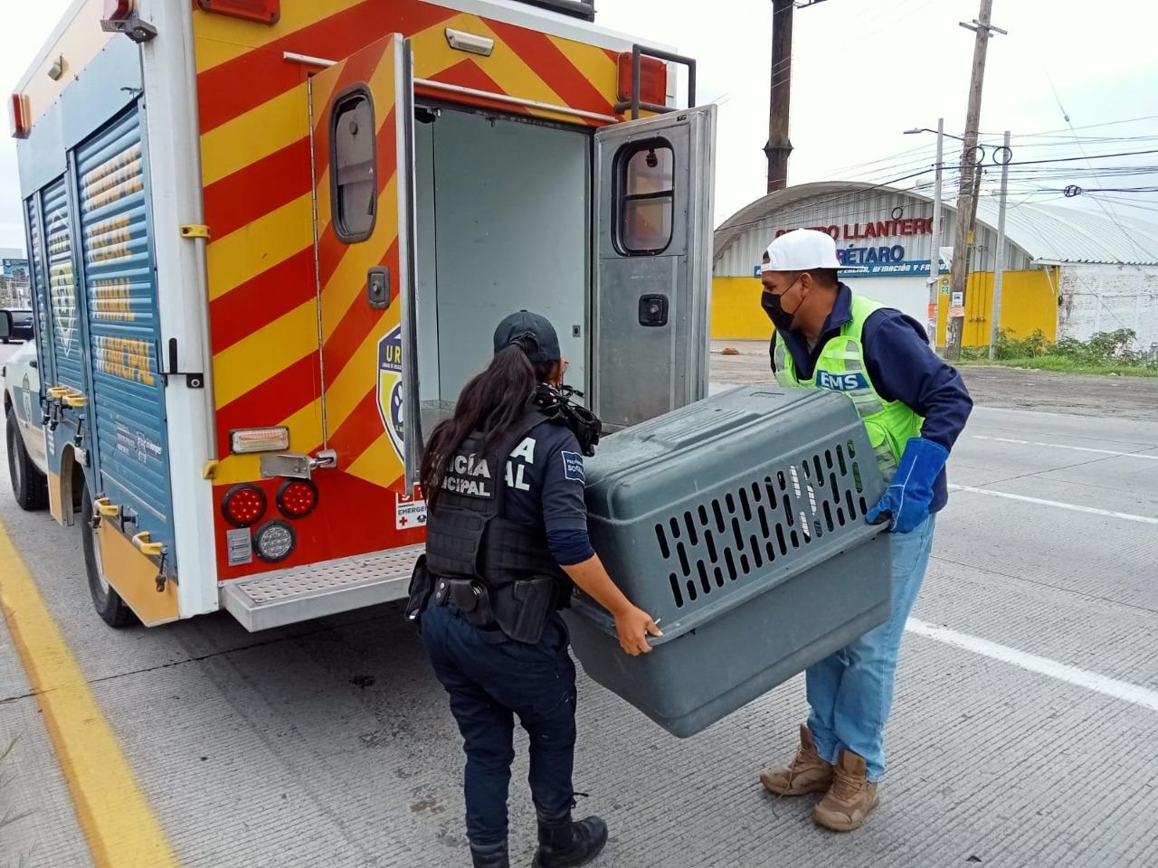 Municipio de El Marqués ha sancionado 45 actos de maltrato animal