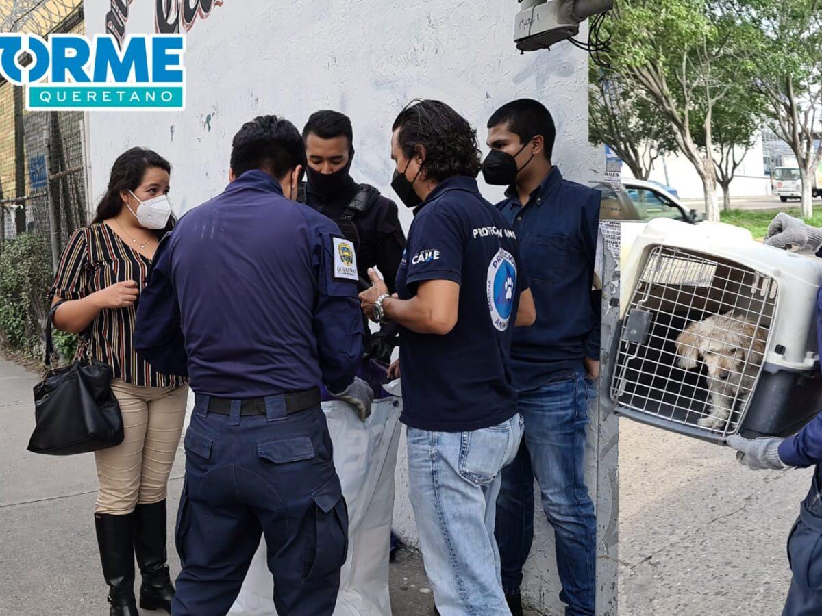 Policías y ciudadanos rescataron a un perrito que quedó atrapado en una alcantarilla